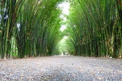 树荫处竹子森林 库存照片