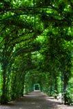 树荫处绿色 免版税库存照片