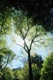 树荫星期日 库存照片