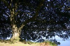 树荫 库存照片