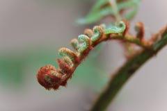 年轻树蕨叶子 库存图片