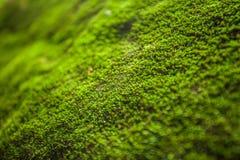树蕨和青苔在岩石 关闭,泰国 库存图片