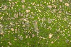 树蕨和青苔在岩石 关闭,泰国 免版税库存图片