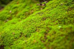 树蕨和青苔在岩石 关闭,泰国 免版税库存照片