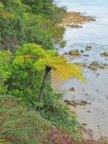 树蕨-新西兰 免版税库存照片
