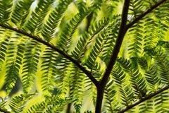 树蕨 库存图片