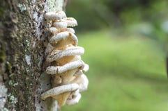 树蘑菇 免版税库存图片
