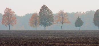 树行与黄色和红色的在领域中间离开以一个有薄雾的森林为背景 免版税库存图片