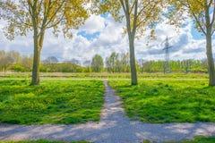 树行在一个领域的沿一条运河在春天 免版税库存图片
