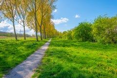 树行在一个领域的沿一条运河在春天 免版税库存照片