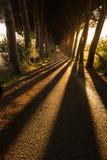 树行沿一条路的在托斯卡纳,接近福洛尼卡- 05/30/2016 库存图片