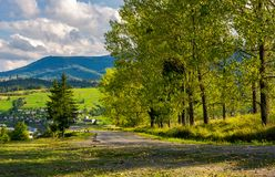 树行沿路的对山 免版税库存图片