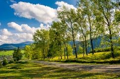 树行沿路的对山 库存图片