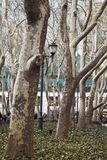 树行,公园在纽约 库存图片