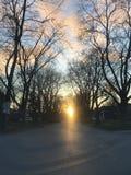 树被排行的日落 免版税库存图片