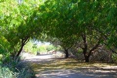 树被排行的机盖 免版税库存照片