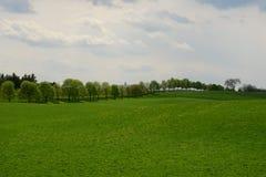 树被排行的牧场地 库存图片