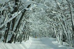 树被排行的积雪的路 图库摄影