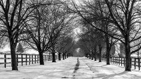 树被排行的积雪的车道 免版税库存照片
