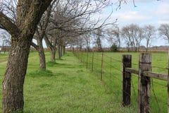 树被排行的篱芭 图库摄影