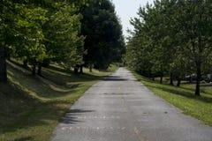 树被排行的自行车道路 免版税库存照片