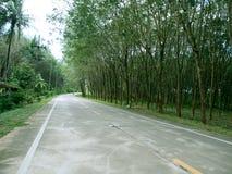 树被排行的路,泰国 免版税图库摄影