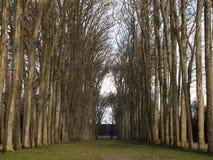 树被排行的车道在冬天 免版税库存图片