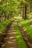 树被排行的道路穿过森林 库存图片
