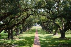 树被排行的道路 免版税库存图片