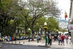 树被排行的主要购物街道在丰沙尔马德拉岛葡萄牙 图库摄影