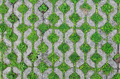 树被插入在砖之间,在地面插入的木根 库存图片