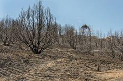 树被烧的山坡  免版税库存图片