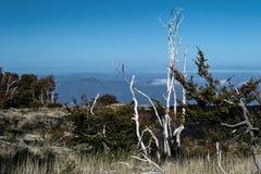 树被烧的茎在熔岩离开在Etna火山爆发以后 免版税库存图片
