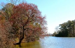 树被种植在河边缘 免版税库存图片