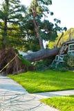 树被连根拔和被碰撞入家庭外形 免版税库存照片