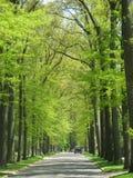 树被遮蔽的街道 库存照片