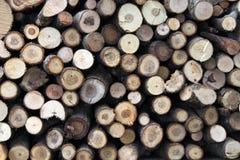 树被锯的树干  免版税库存照片