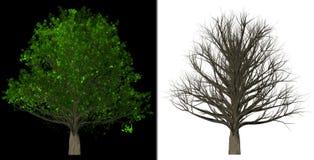树被隔绝的抽象背景 库存照片