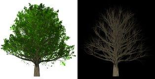 树被隔绝的抽象背景3D例证 库存照片