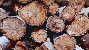 树裁减、桦树和橡木木柴特写镜头 免版税库存照片