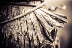 树裂片细节 库存照片