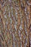 树裂缝吠声纹理在夏天在农场 免版税库存照片