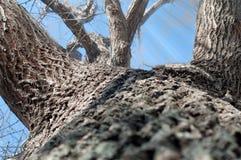 树讲我们美好的故事 免版税图库摄影
