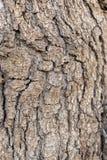 树词根的细节 库存图片