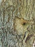 树词根 库存图片