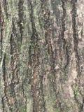 树词根 免版税库存照片