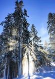 树诡计滑雪 库存图片