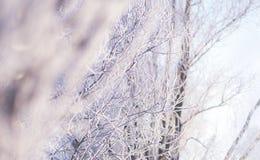 树赤裸分支在霜的在背后照明的一个晴朗的冬日 免版税库存照片