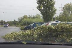 树跌倒 免版税库存照片