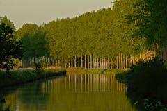 树车道沿运河` de Moer `的在晚上光,反射在水中 免版税图库摄影